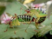 La biodiversidad comienza más cerca de lo que imaginas