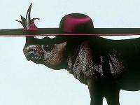 A Alex Taylor le gustan las historias de terror (o el caso del rinoceronte y el fotógrafo endiosado)